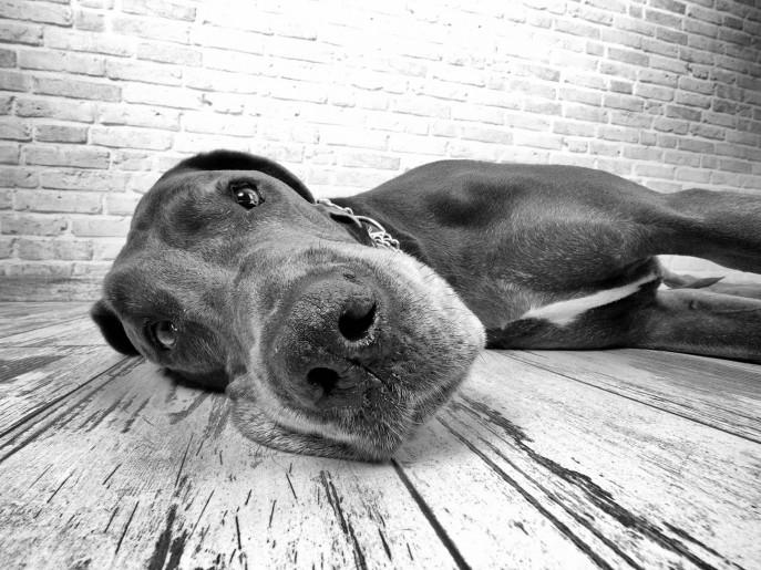 Fotografie_Hund_Foto_16