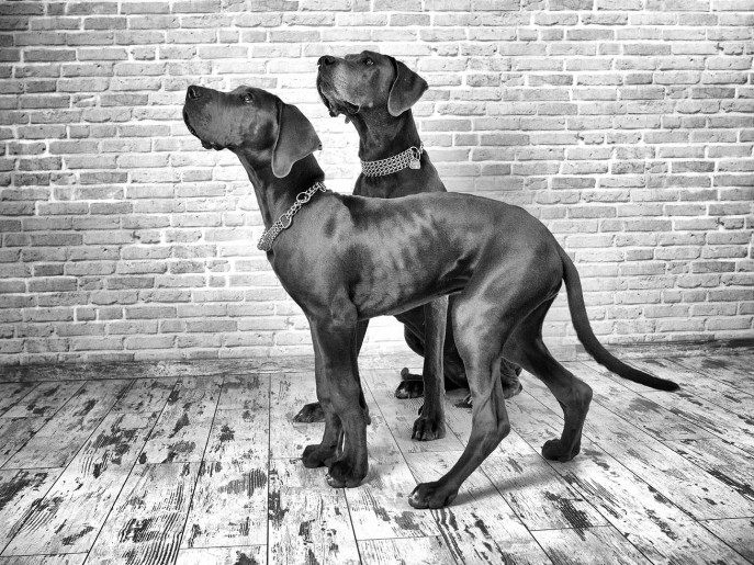 Fotografie_Hund_Foto_18
